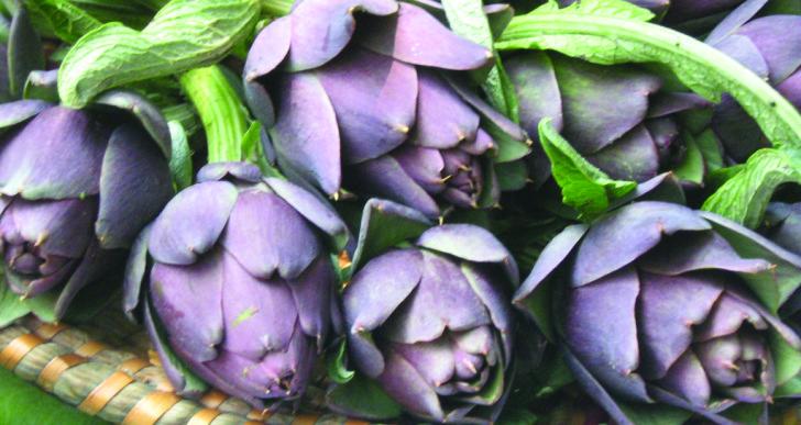 Carciofo violetto di Chioggia