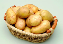 Patata precoce di Chioggia